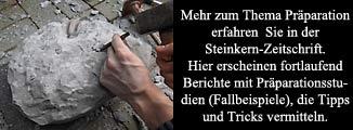 Berichte über Fossilien-Präparation finden Sie auch in der Steinkern-Zeitschrift!