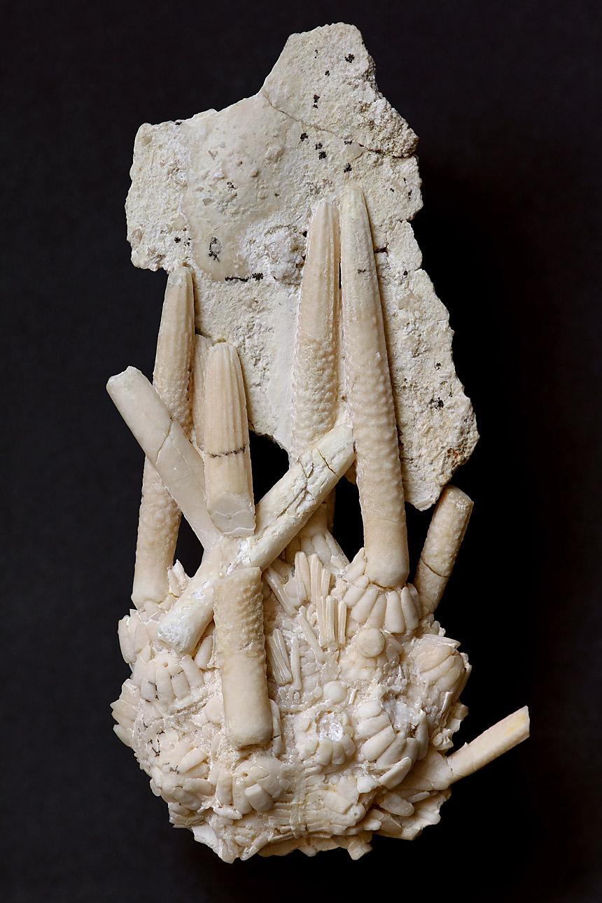 08 - Fossil des Monats August2021