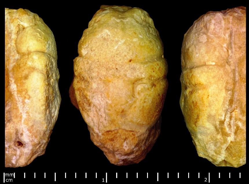 Longodromites