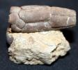 Bactrocrinites fusiformis (ROEMER, 1844)