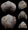 Brachiopode Coeloterorhynchus sp.
