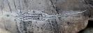 03 - Fossil des Monats März 2020 - Steinkern.de FOSSIL DES JAHRES 2020