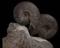 05 - Fossil des Monats Mai 2021