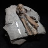 06 - Fossil des Monats Juni 2021