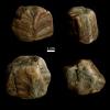 Monocraterion tentaculatum (Torell 1870) und Skolithos linearis (HALDEMANN 1840)
