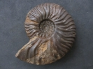 Wutachregion (Ba.-Wü.), Aalenium und Unterbajocium