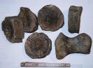 Ichtyosaurier Knochen