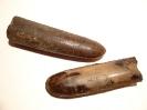 Dactyloteuthis irregularis