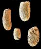 Brutstrukturen (Calichnia)