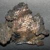 Palaeoniscum (Kupferschieferhering) in Silber