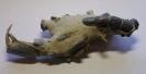 Mud lobster von Gunn Point